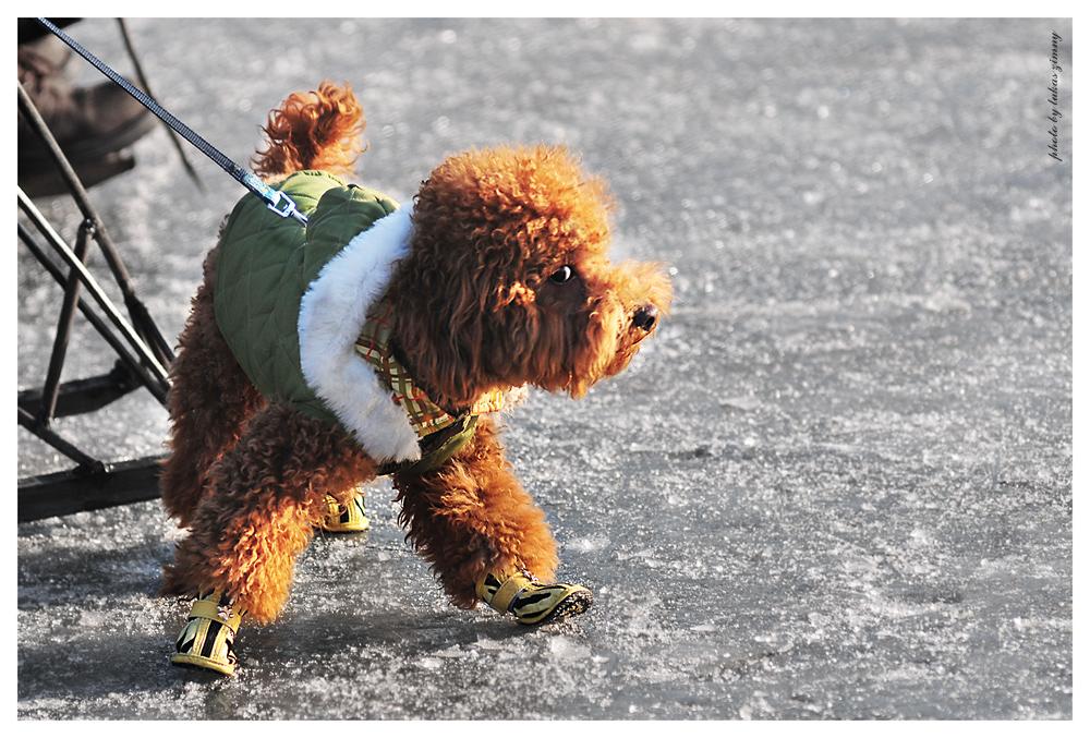 where are my skates