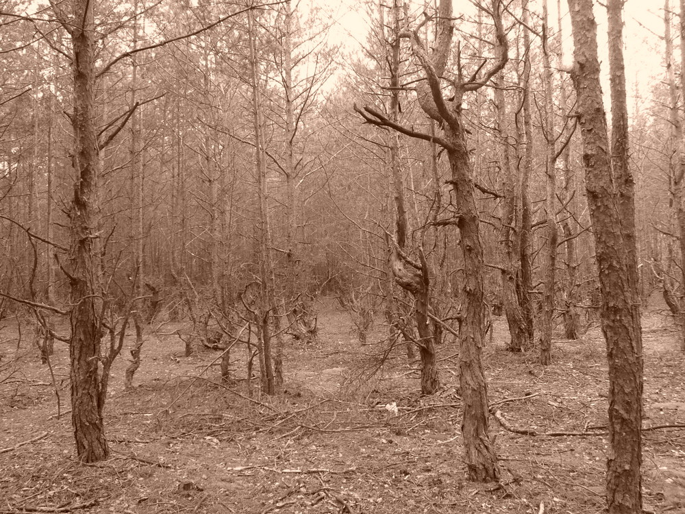 Where is the Blair Witch