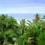 Where Palm Ocean Meets Indian Ocean