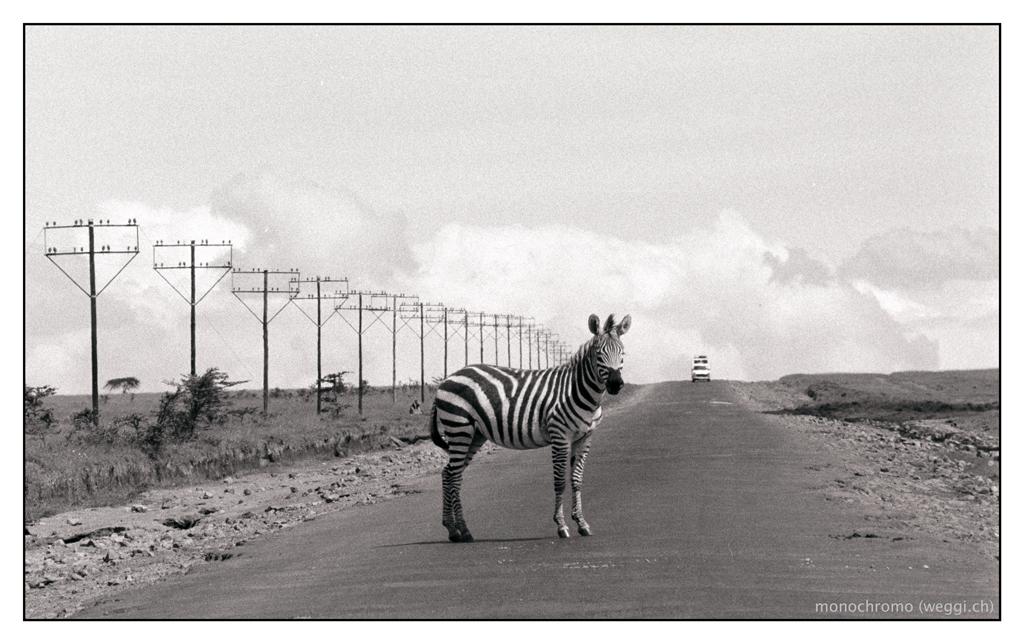 where's the zebra-strip?