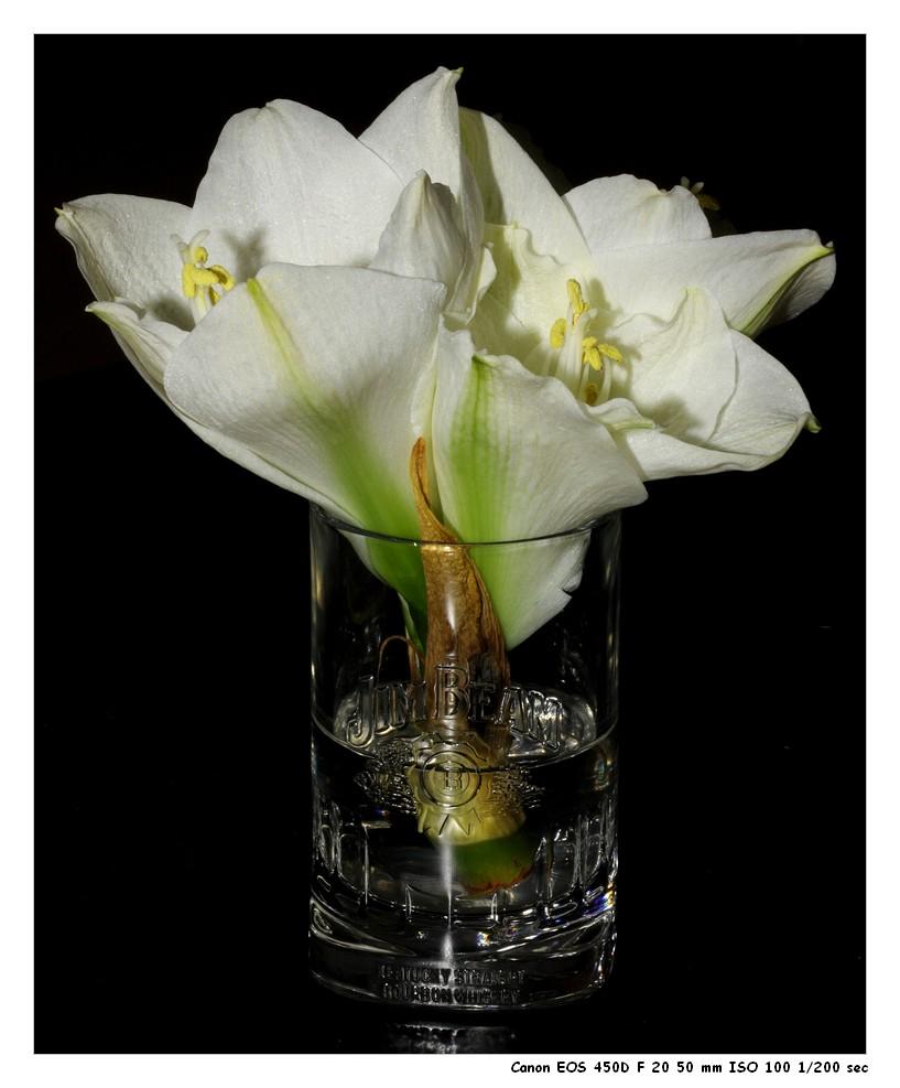 Whisky & Blume