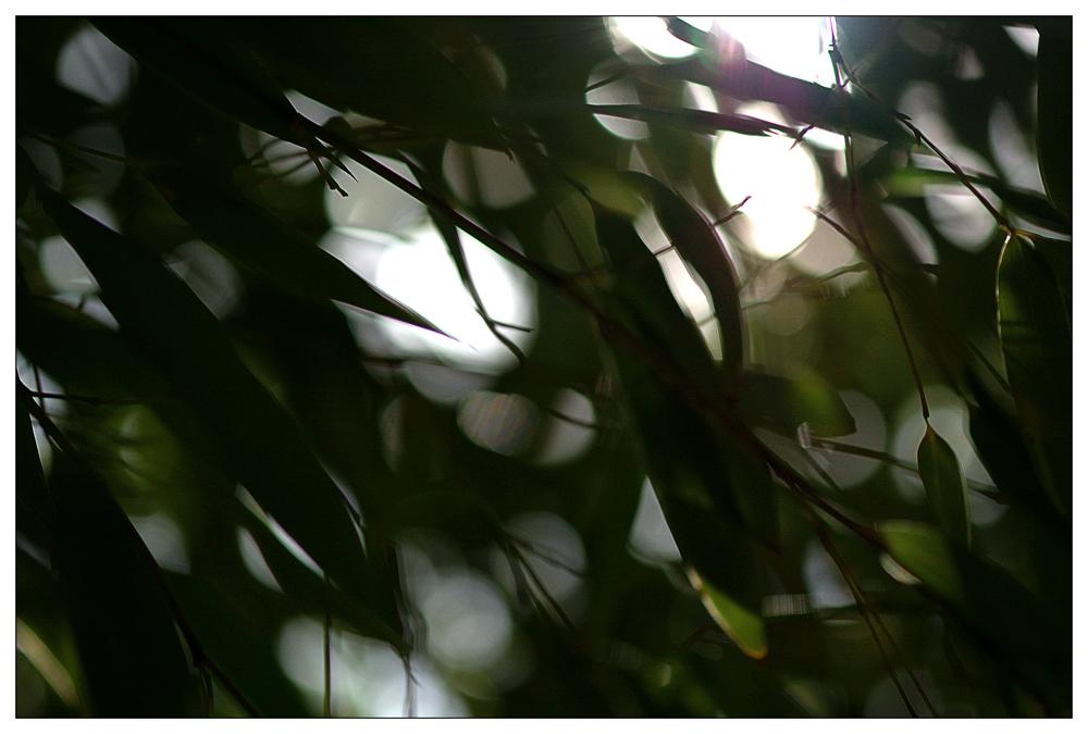 ...whispering leaves...
