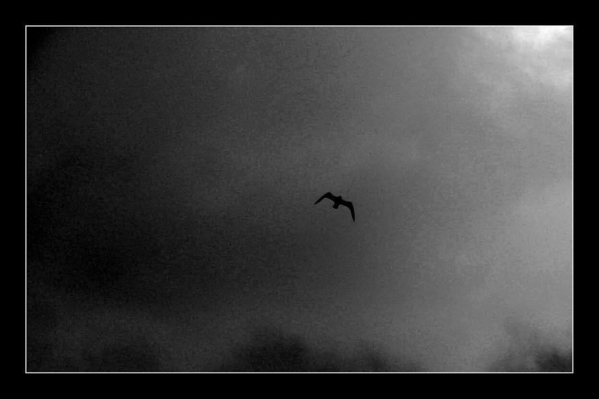 Whit darkness