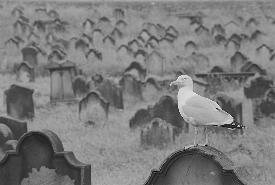 Whitby Cemetary