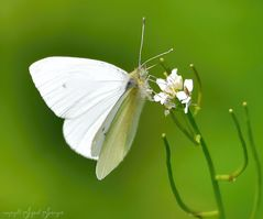 white Butterfly on green