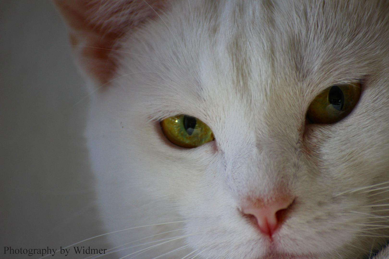 White Cat...