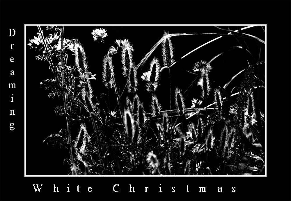 """""""White Christmas......."""""""