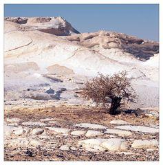 White Desert Elements XI