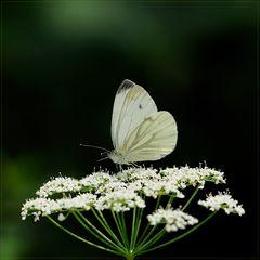 White & Green