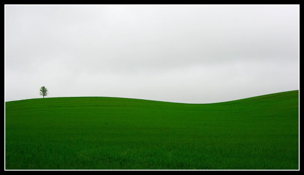 white-green landscape...