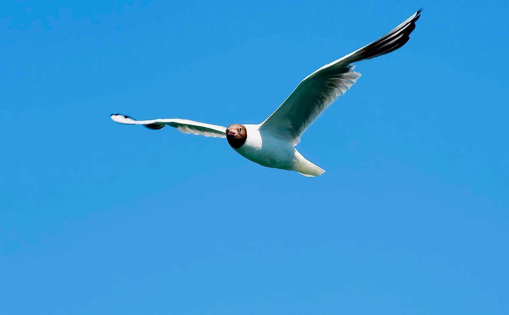 White gull sail