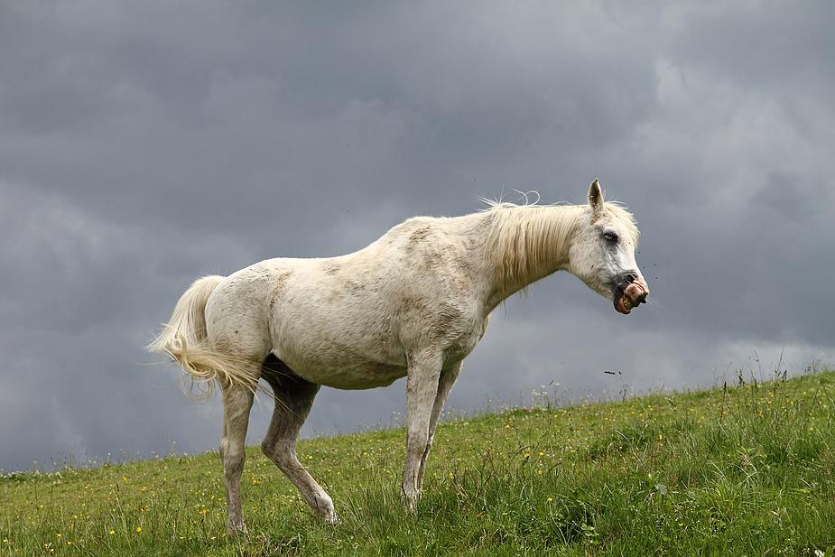 ~ white Horse ~