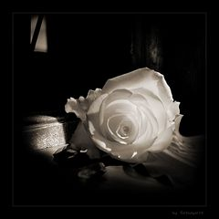 White lies veiled in smooth petals