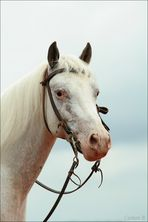 ~ white look ~