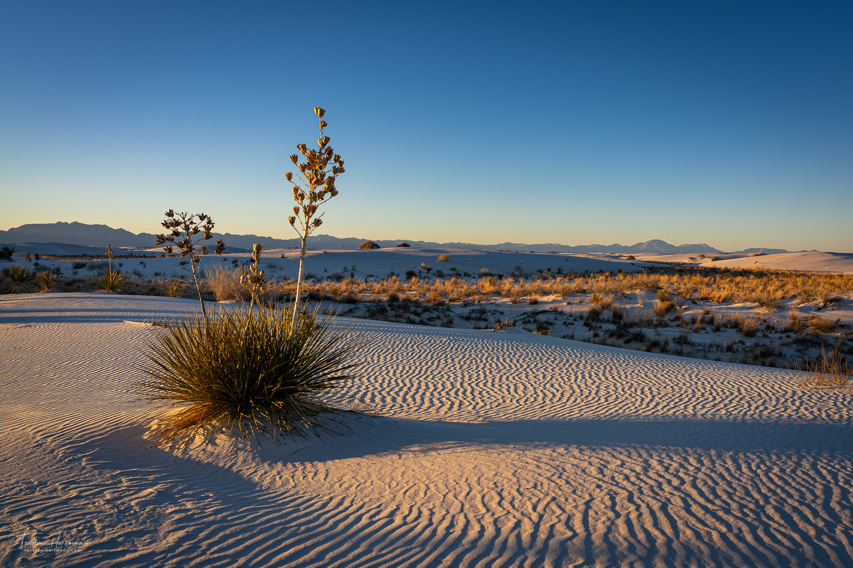White Sands National Park (USA)