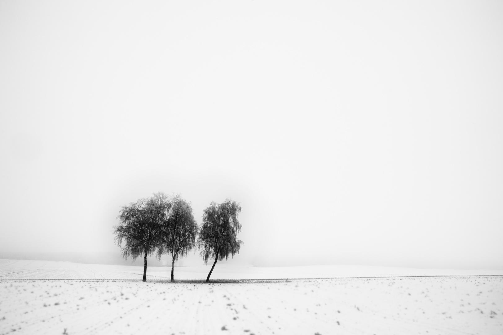 White Snow #1