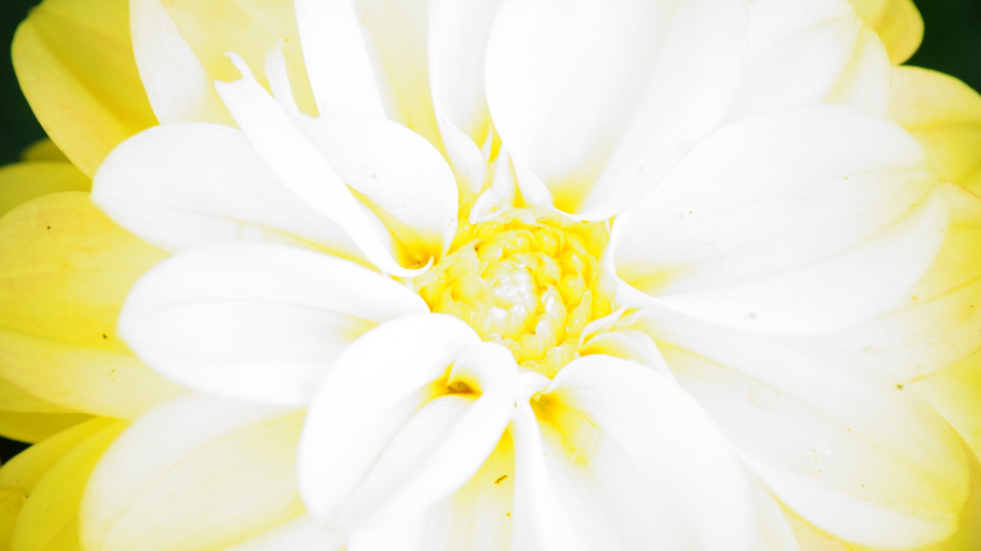 White & Yellow