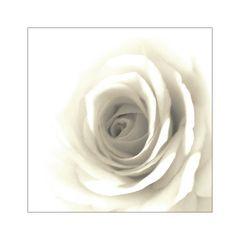 white.nites...
