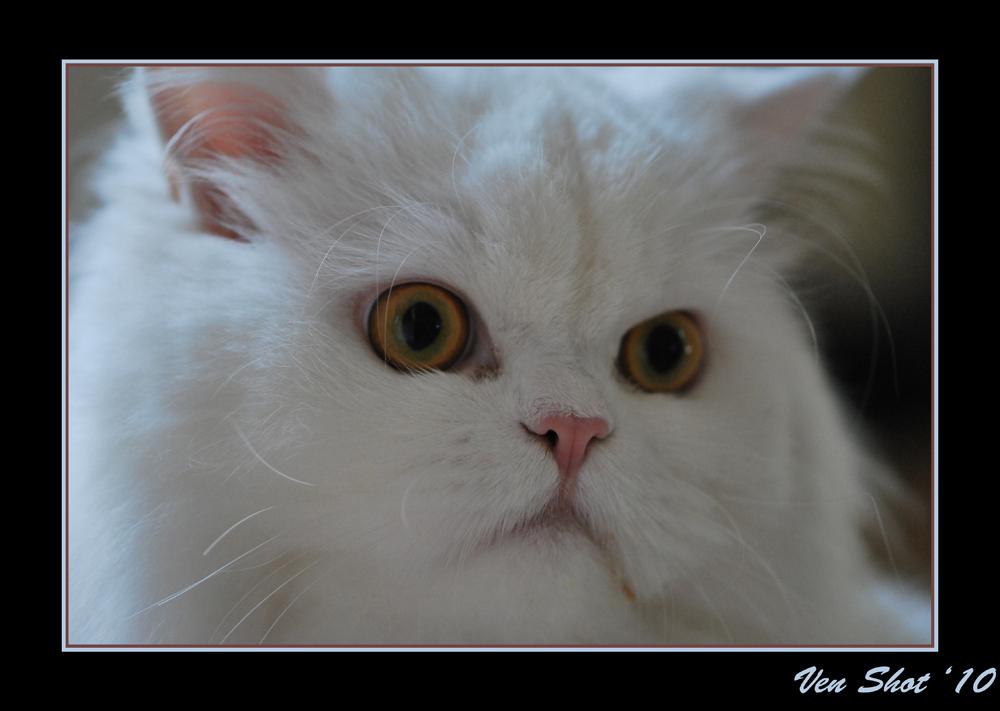 Whitey Cat