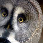 Whooo you looking at?
