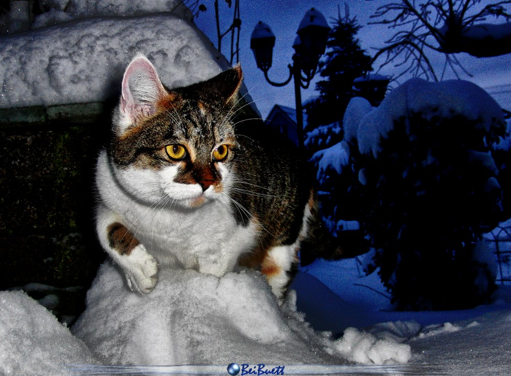 Whoopi die Schneekatze