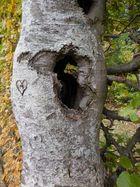 wie alt mag M gewesen sein, nachdem der Baum durchlöchert ist?