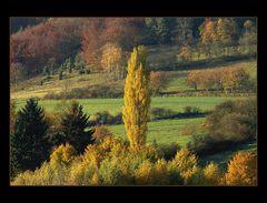 """...wie Bäume eine Landschaft prägen... (2. von """"Herbst-Landschaft- Kompositionen"""")"""