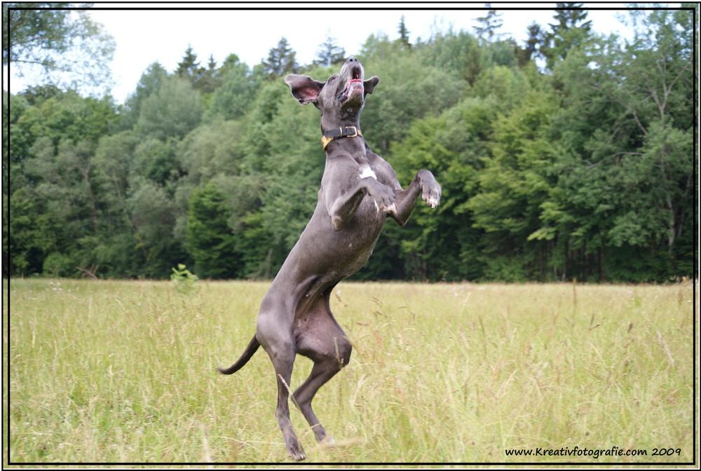Wie bringt man einen Hund zum Fliegen ?