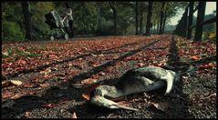 wie das Laub im Herbst