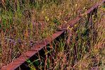wie dazumal laufen auch heute noch die Gleise