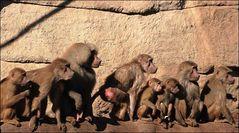 Wie die Affen auf dem Schleifstein...