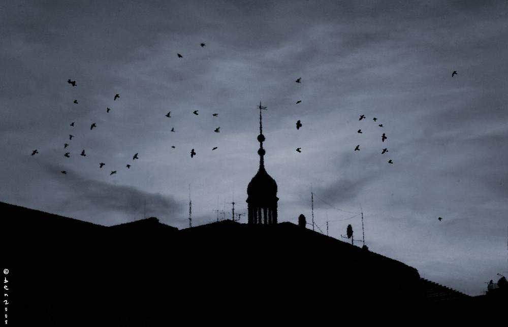 Wie die Vögel fliegen...