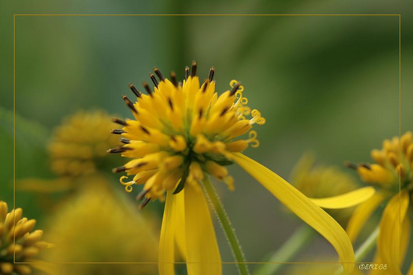 wie ein Blumenstrauß