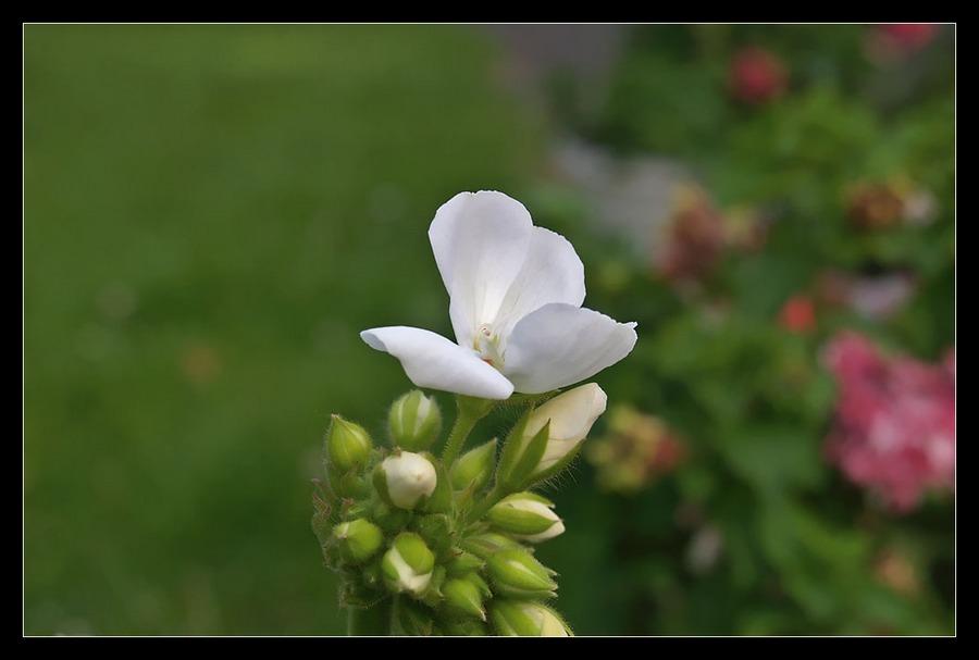 Wie ein Schmetterling auf einer Blüte...
