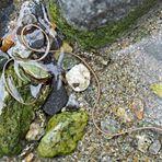 Wie eine Mini-Wasserschlange: Saitenwurm - Nematomorpha: comme un mini-serpent dans l'eau!