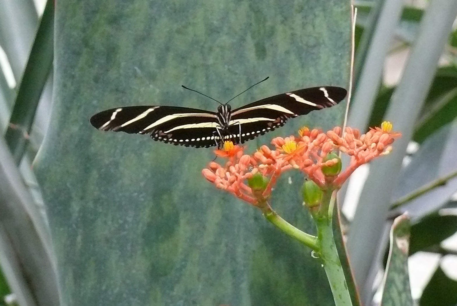 Wie heißt der Schmetterling?