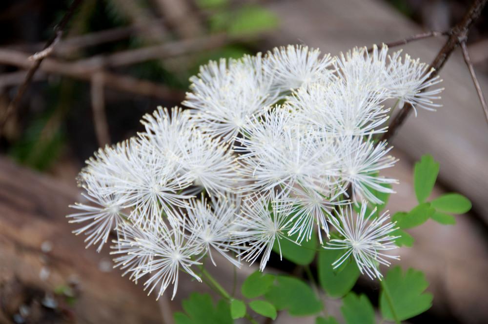 Wie heisst diese Blume?