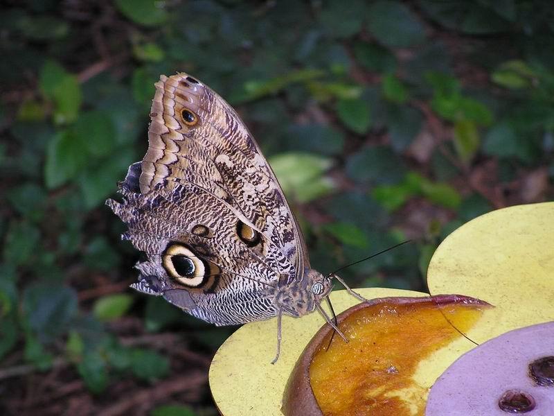 Wie heißt dieser Schmetterling?