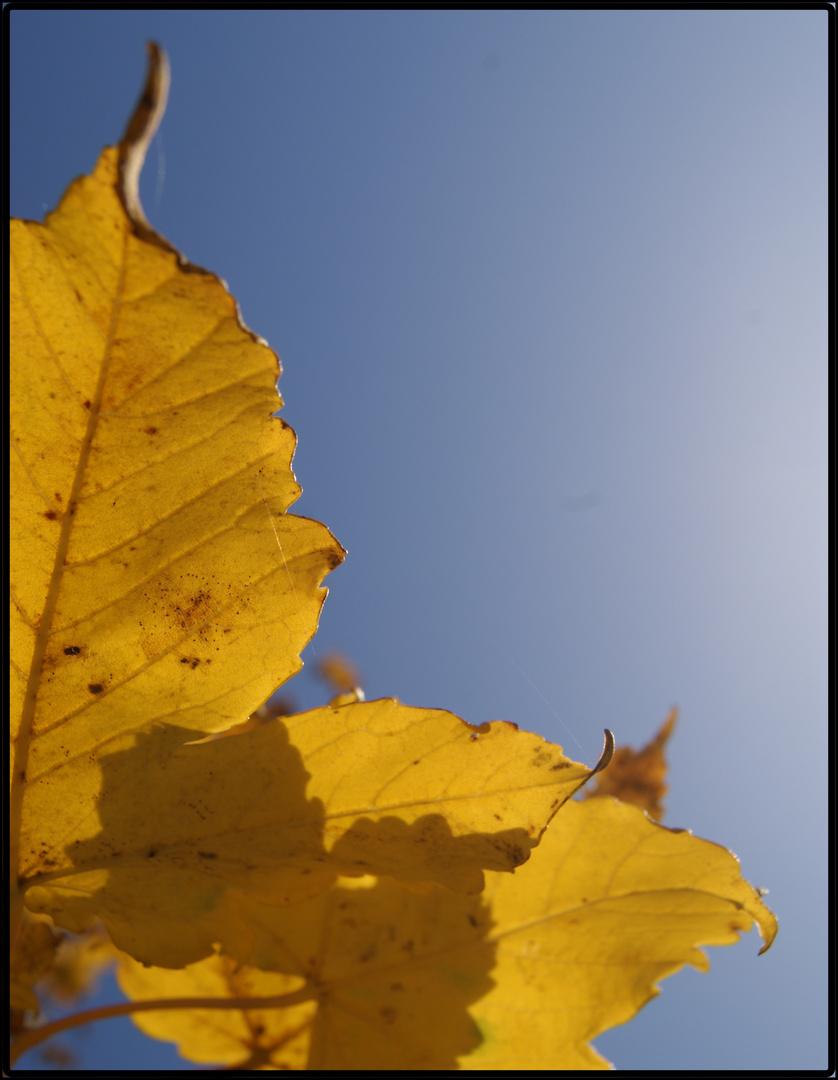 Wie hoch ein Baum auch sein mag, seine Blätter fallen doch zur Erde.