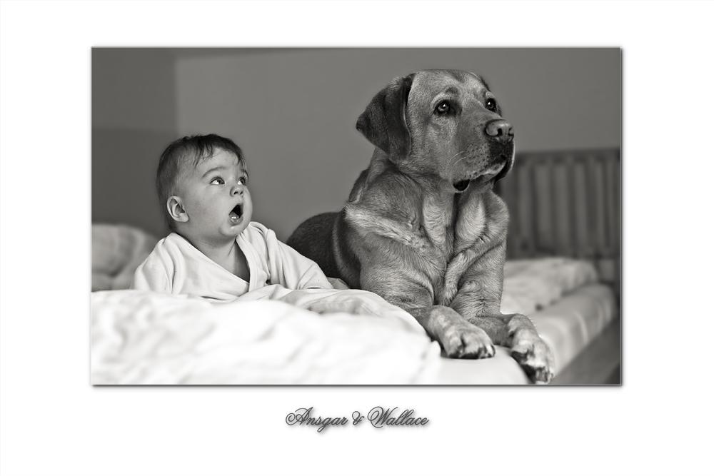 Wie Hund und...