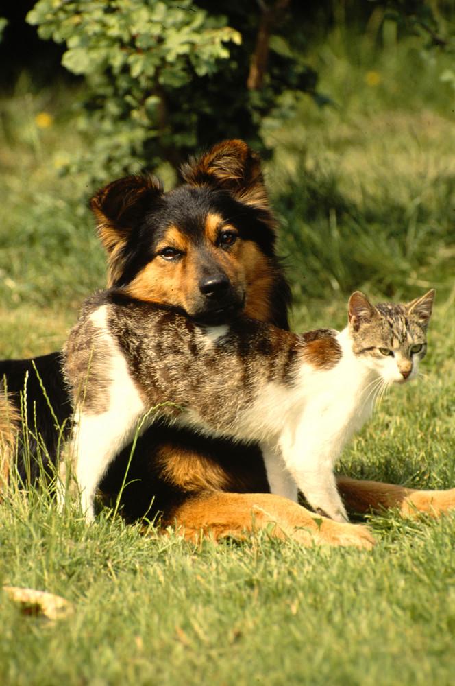 Wie Hund und Katz