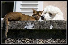 Wie Hund und Katze ...