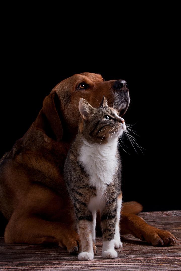 Wie Hund und Katze......
