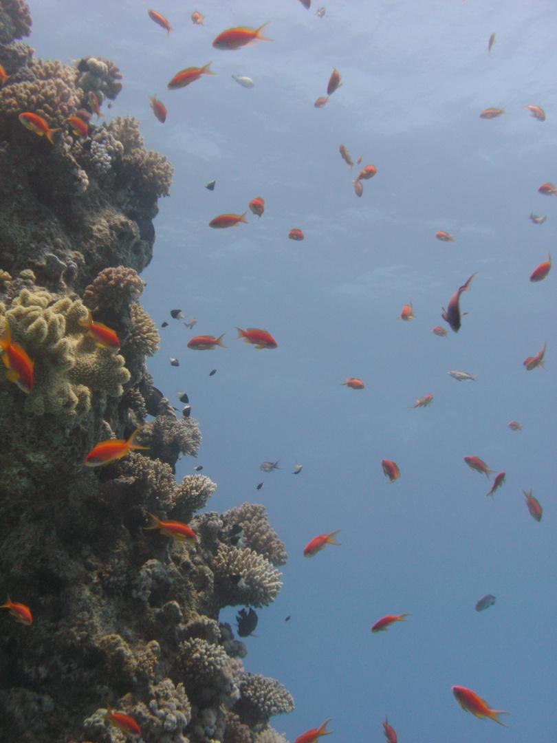 Wie im Aquarium