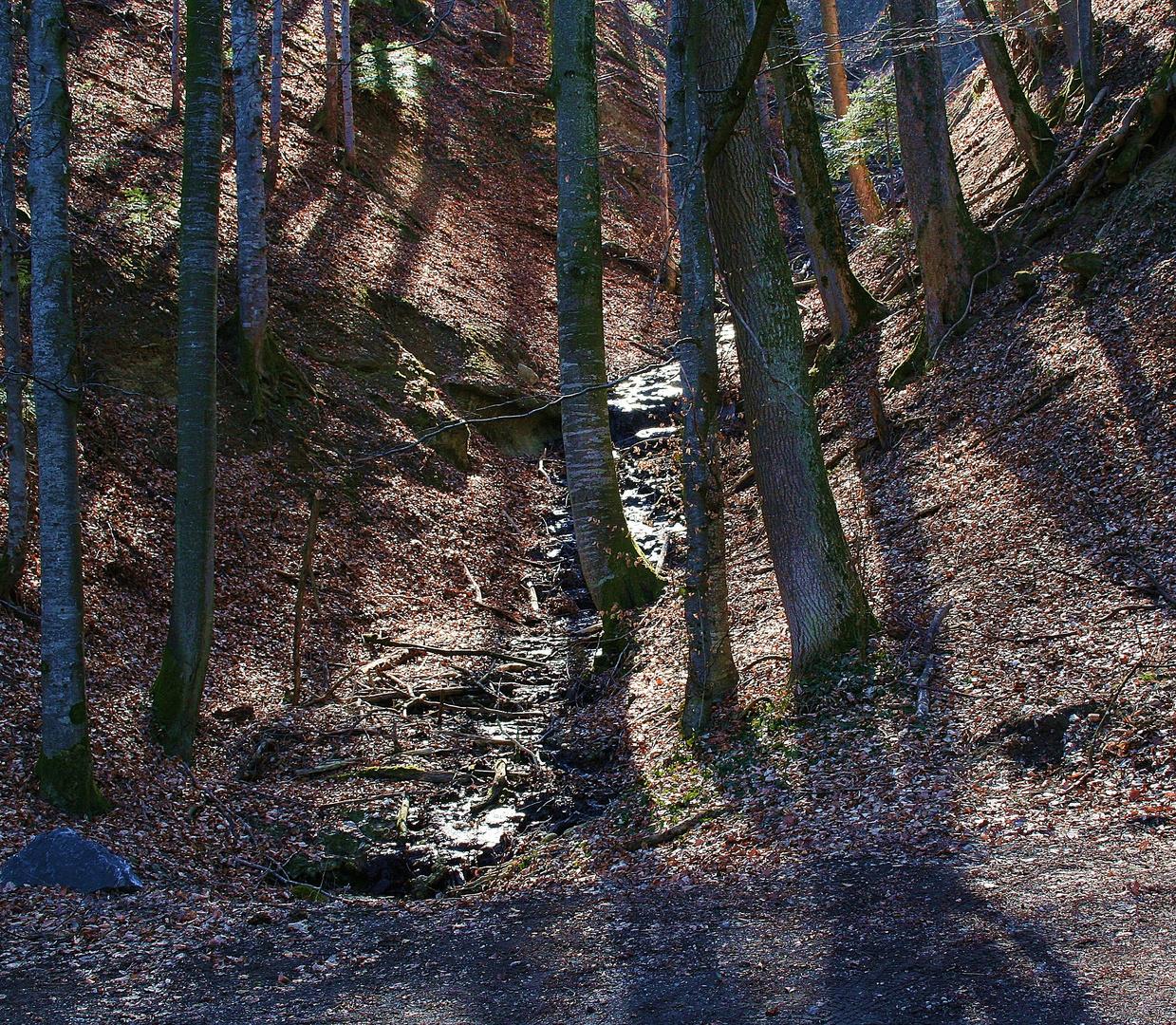 Wie im Märchenwald...