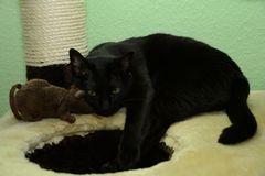Wie Katz und Maus 2 ;)