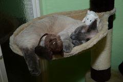 Wie Katz und Maus ;)