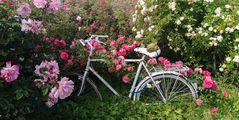 wie kommt mein Fahrrad in den Vorgarten?