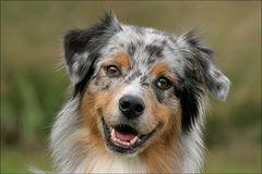 Wie lacht der Hund?