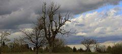 Wie lange wird mein Lieblingsbaum dem Wetter noch widerstehen können...